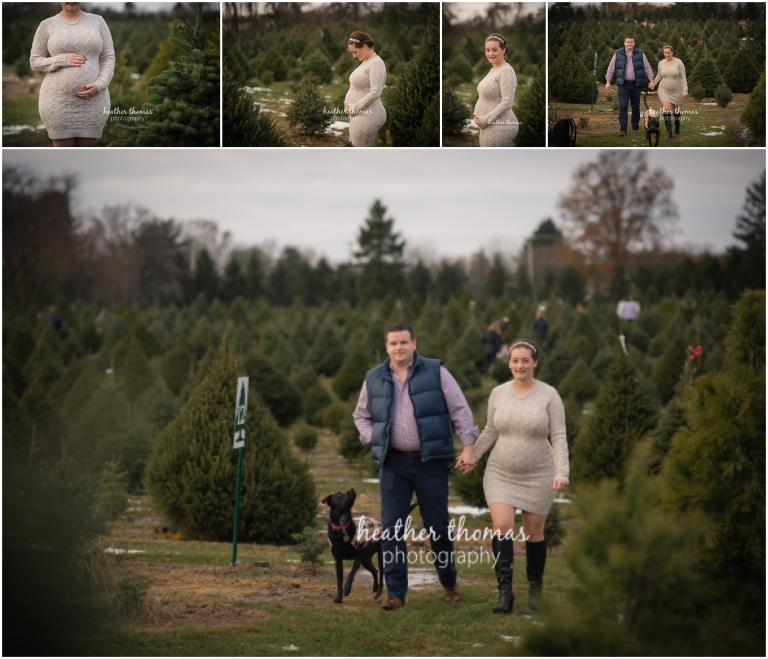 maternity photos at a christmas tree farm in yardley pa